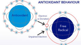 (AO-X) Anti-Oxidant-X Patch